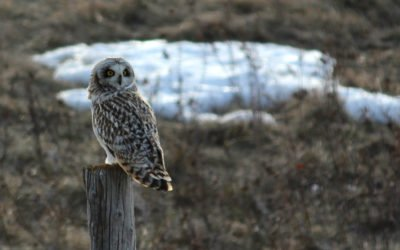 Montezuma Winter Raptor Survey