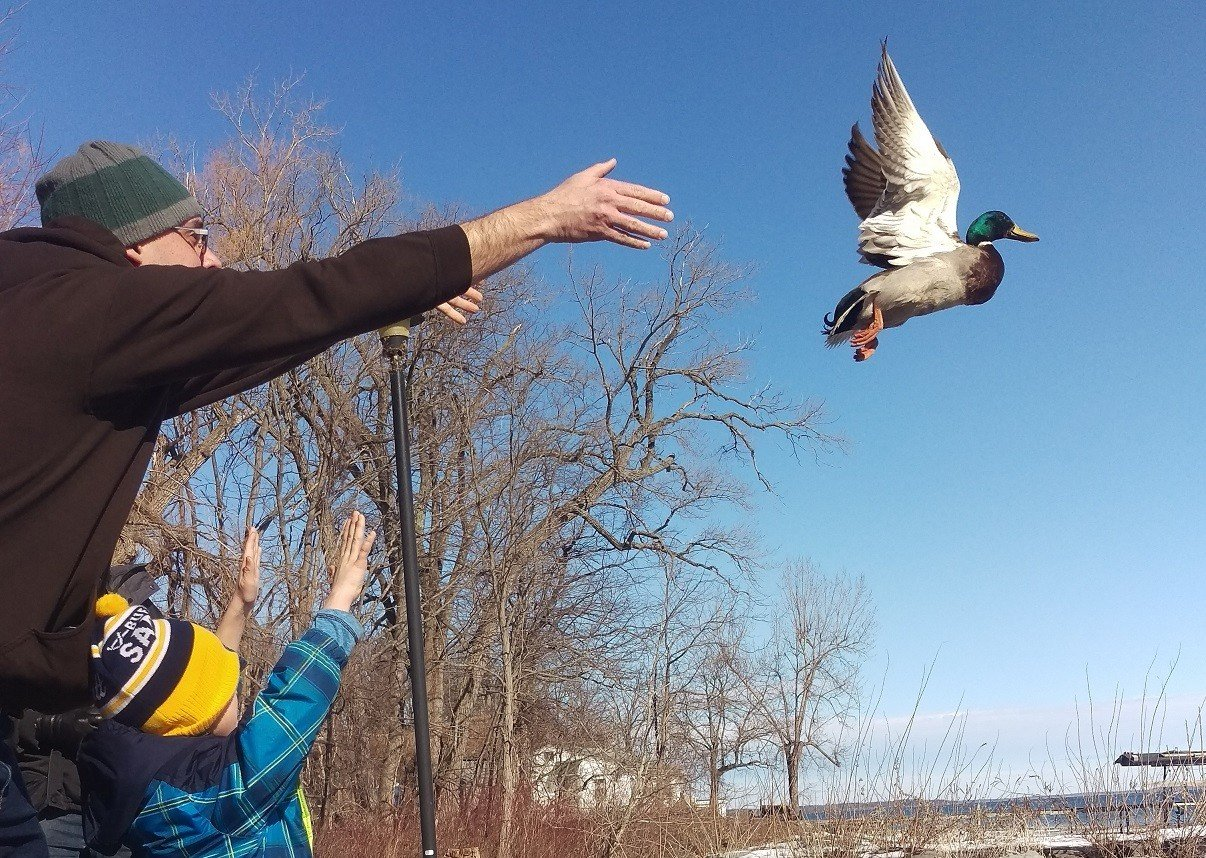 Duck Banding on Cuyuga Lake