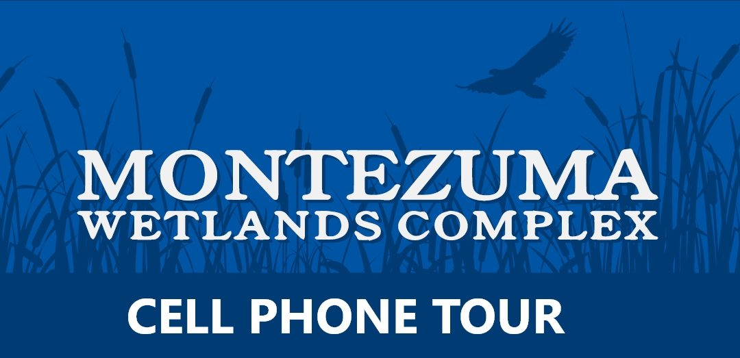 Announcing the Launch Our New Mobile Phone Tour