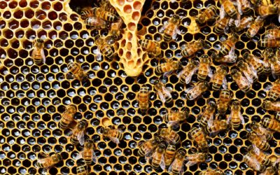 The Stinging Possibility of Bee Extinction